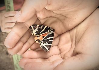 FSUK_moth%20-%201_edited.jpg