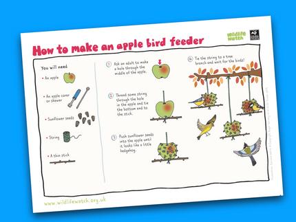 MAKE: Feed the birds with these bird feeder ideas