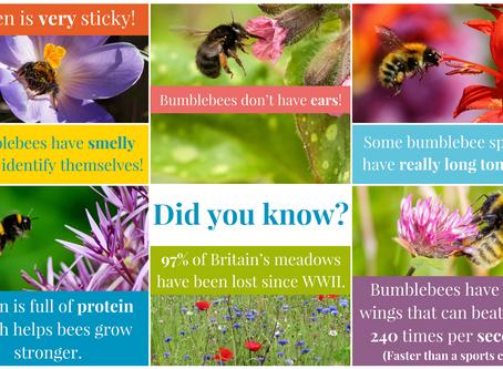 ACTIVITY: Bumblebee hunt