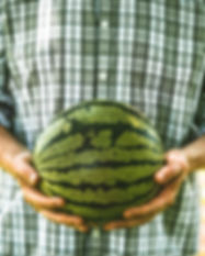 Picking Melon.jpg