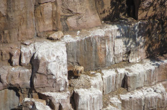 Moremi Gorge, Botswana