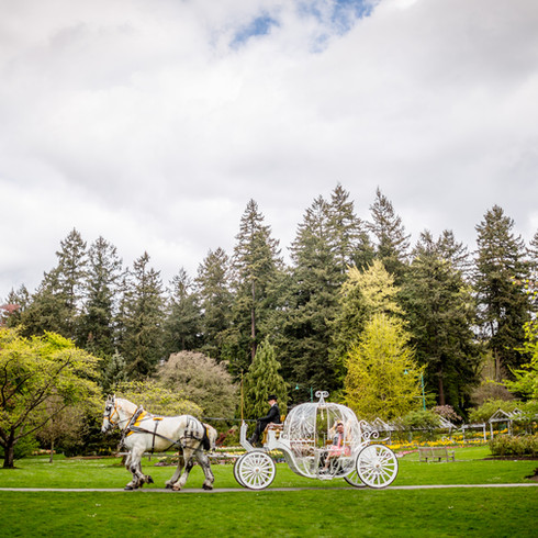 Stanley Park Horse and Carriage Wedding