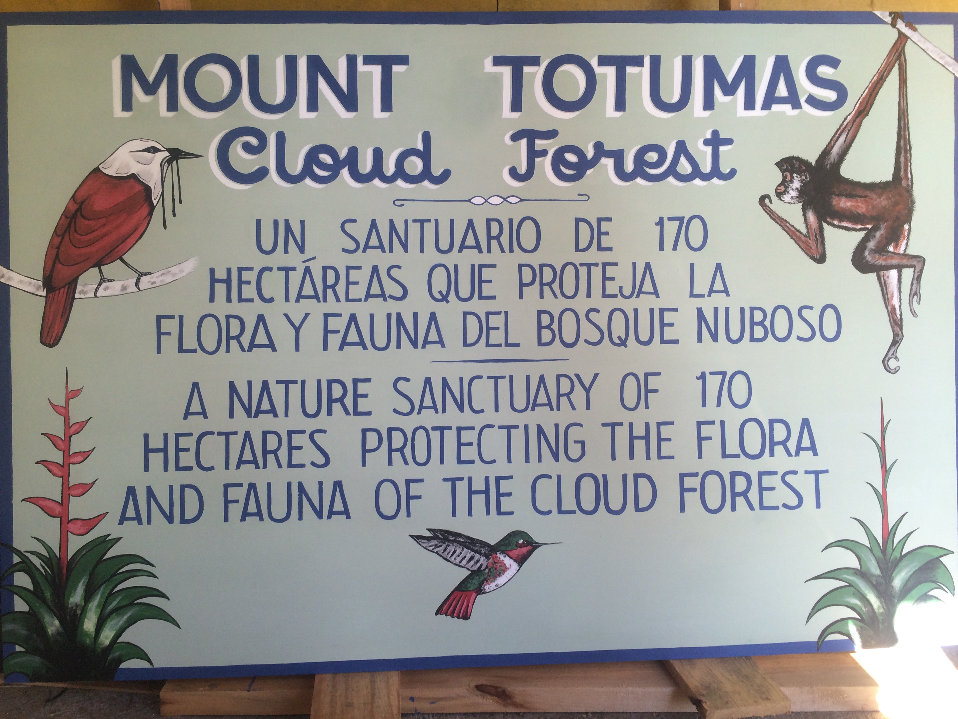 Cloud Forest Sign
