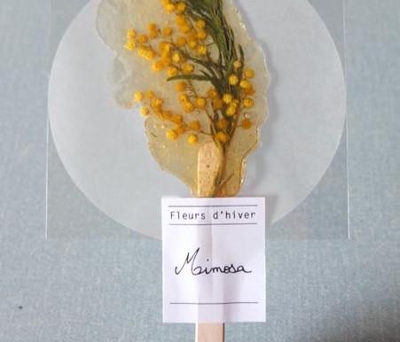 L'infusion Mimosa pour La Villa Noailles
