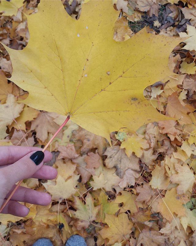 maple leaf canada segurando folha outono fall @tassivale Tassiana Vale D' Elboux Tassi Vale