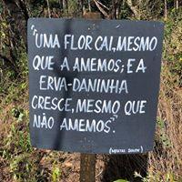 @tassivale Tassiana Vale D' Elboux Tassi Vale uma flor cai mesmo que a amemos e a erva-daninha crescer mesmo que não amemos placa blackboard sign cachoeira dos dragões pirenopolis goias