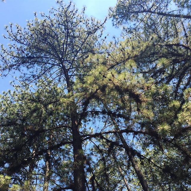 árvore jardim botanico brasilia distrito federal brasil dia da árvore @tassivale Tassiana Vale D' Elboux Tassi Vale