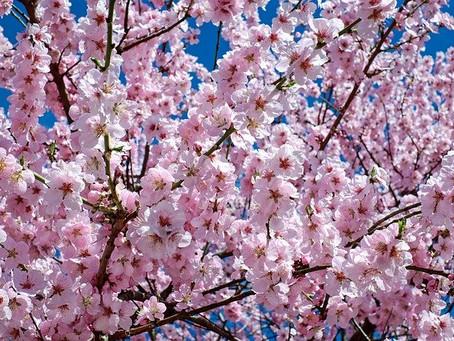 Phänomen- Frühjahrsmüdigkeit