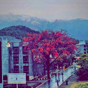 Submission #18 Deepasha Baral, UPES