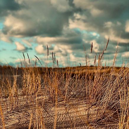 Dunes et herbes.JPG