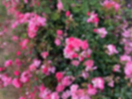 flower background website.jpg