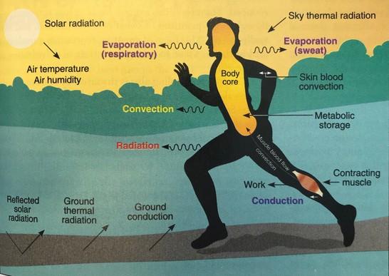 θερμορύθμιση σώματος