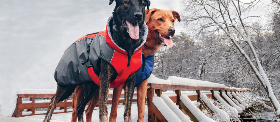 How to Choose a Dog Coat