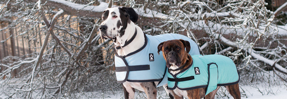 Dog Coat Banner Photo2.jpg