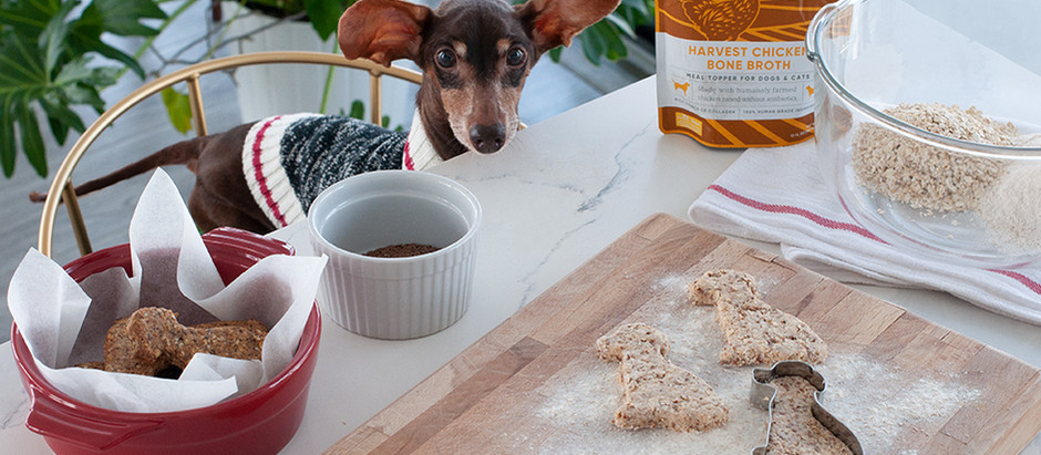 Homemade Treats For Your Holiday Hound!