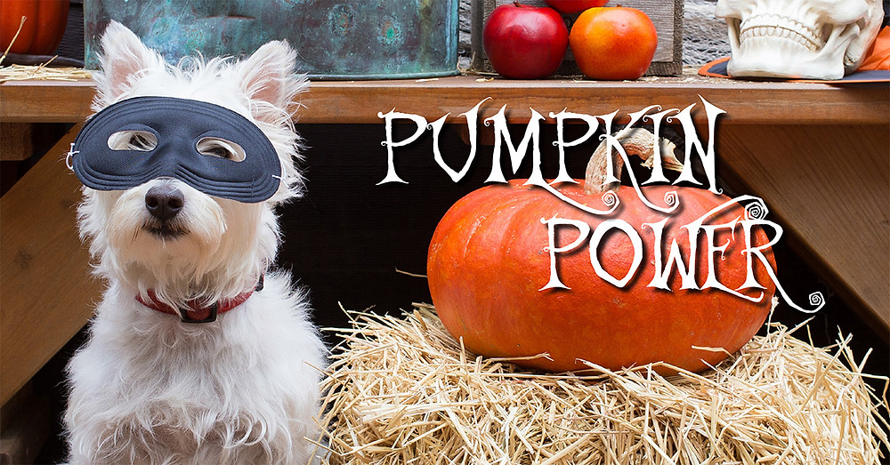 Dog in mask and pumpkin
