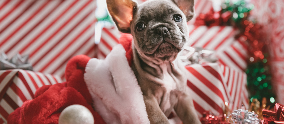 Tips & Tricks for a Pawsome Holiday Season