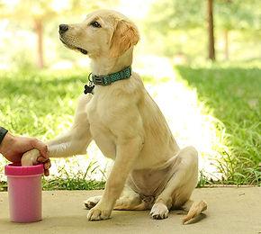 dog9551_Lifestyle2.jpg