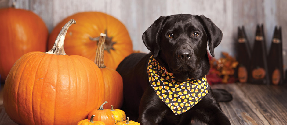 Keep Your Hound Happy This Hallowe'en