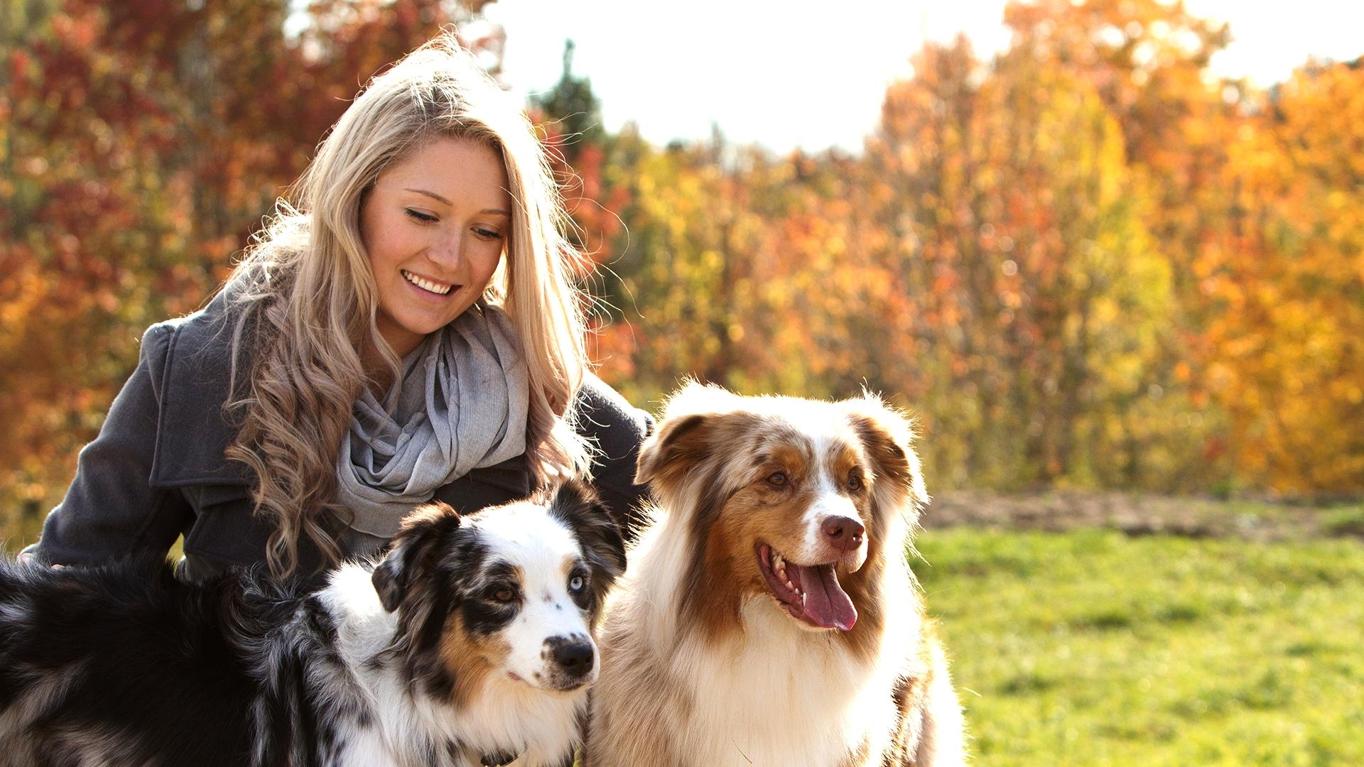 Girl with two australian shepherds