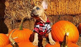 B&F_Blog_ArticleImage-Pumpkin.jpg