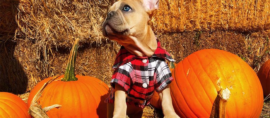 Pumpkin Power!