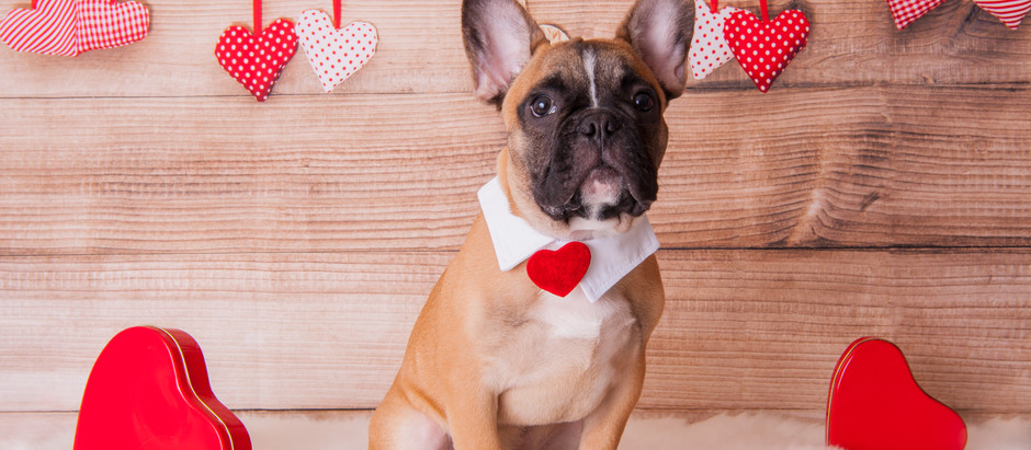 5 Valentine's Day Doggie Date Ideas