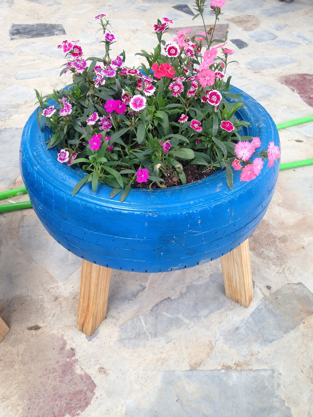 Chookie's Tyre Planter