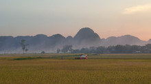 Harvest Season in Ninh Binh