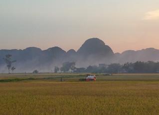 Harvest Season in Ninh Binh