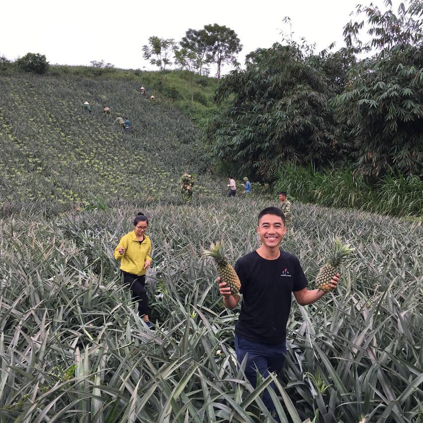 van pineapples