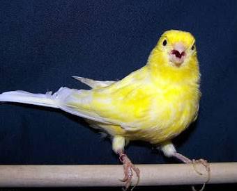 "Bird Says ""Boo!"""
