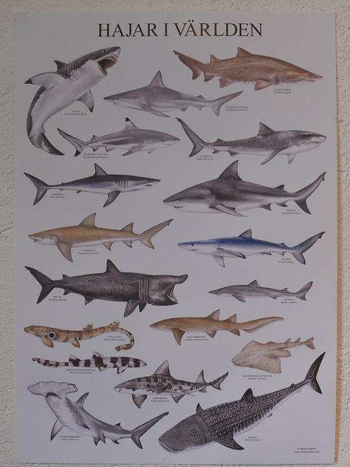 Hajar i världen