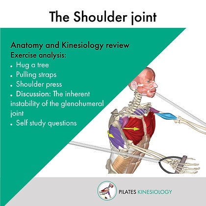 Pilates Kinesiology Short Course: The Shoulder Joint