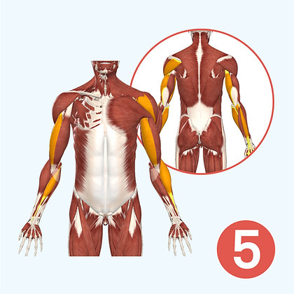 Anatomy Course Module 5