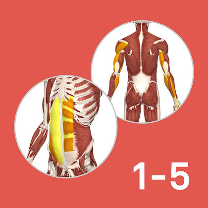 Anatomy Course Complete Modules 1-5