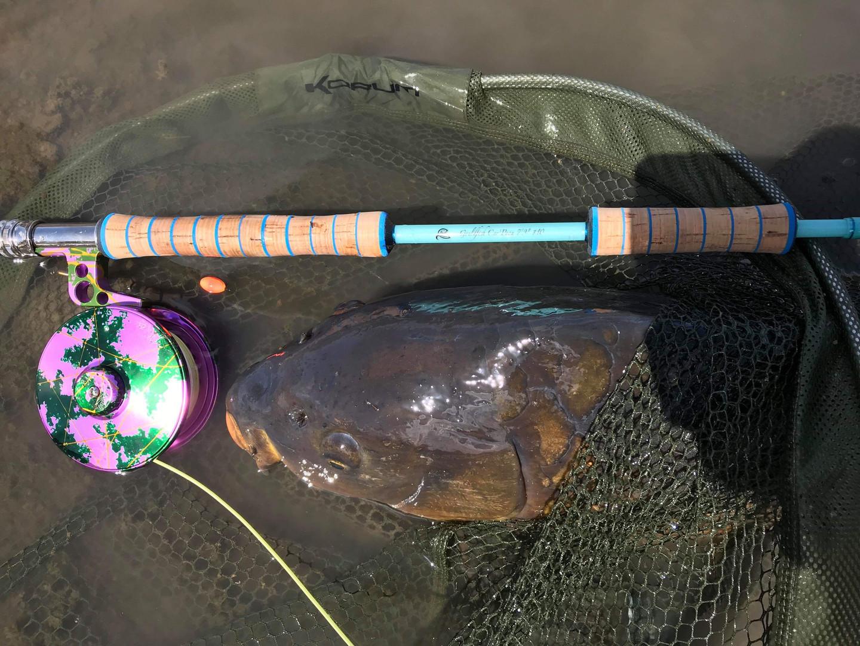 Gouldfish Car'Poon