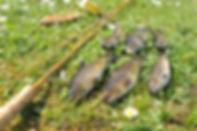 Loch Skerrols Brown Trout Gouldfish