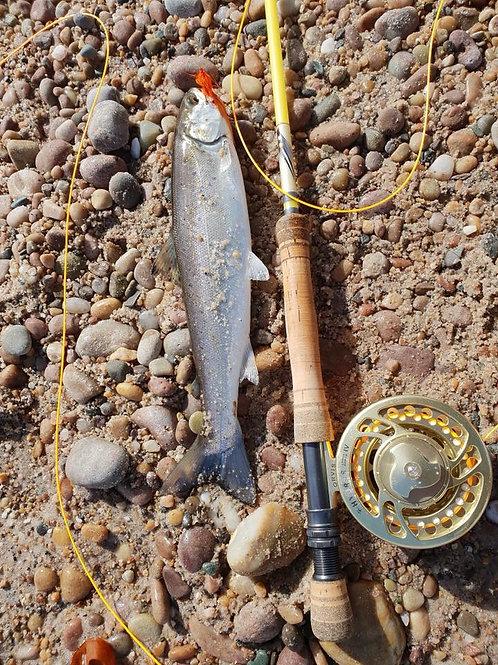 9'0 8wt 4pc Gouldfish LemonGlass S2 Fast Glass Custom Fly Rod
