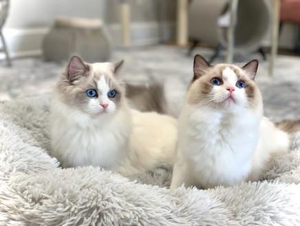 Heidi and Havana 5.5 months