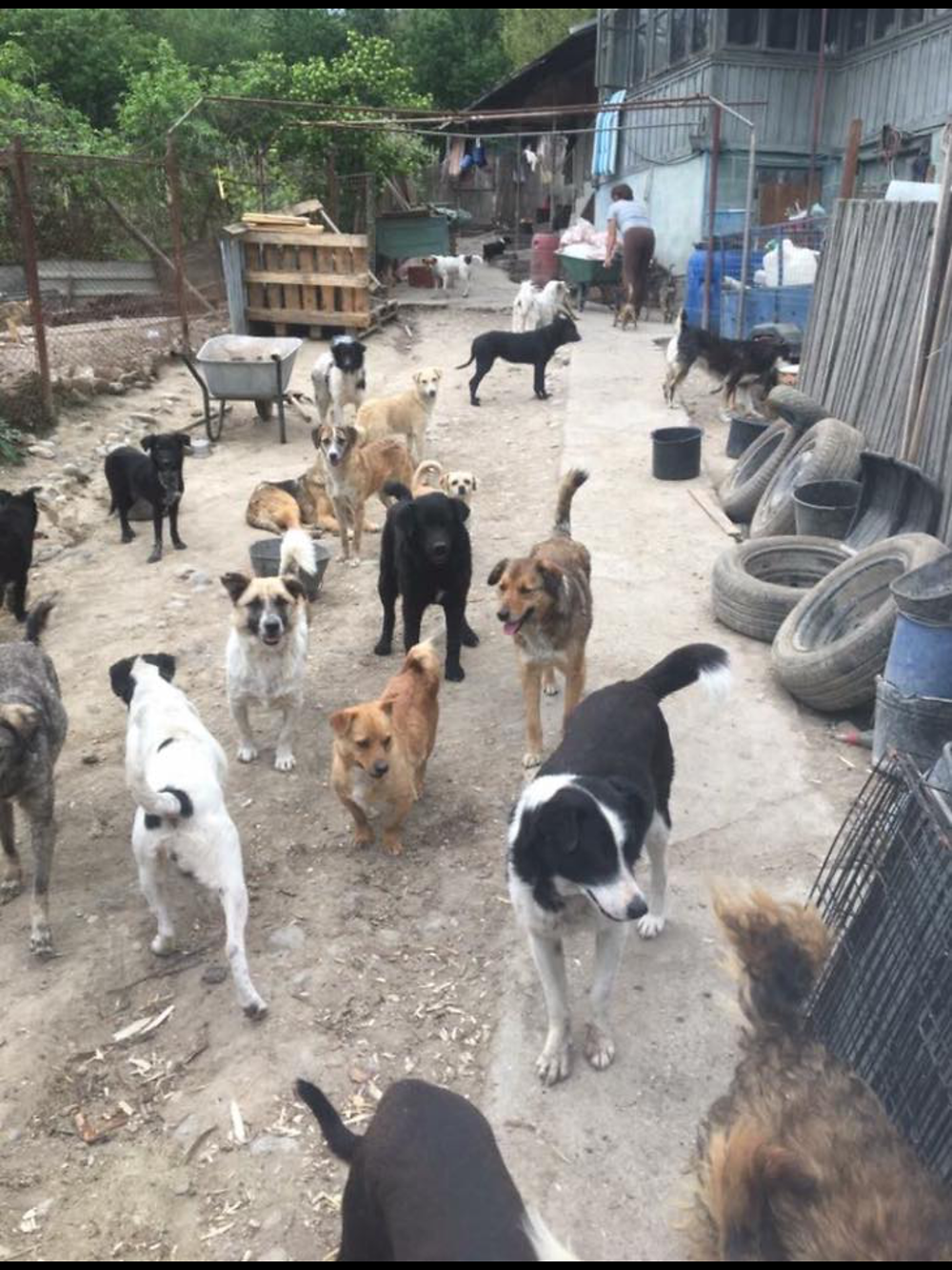 Romania, rescued dogs, Irina's sheltered hearts, Photography by Louisa Jane