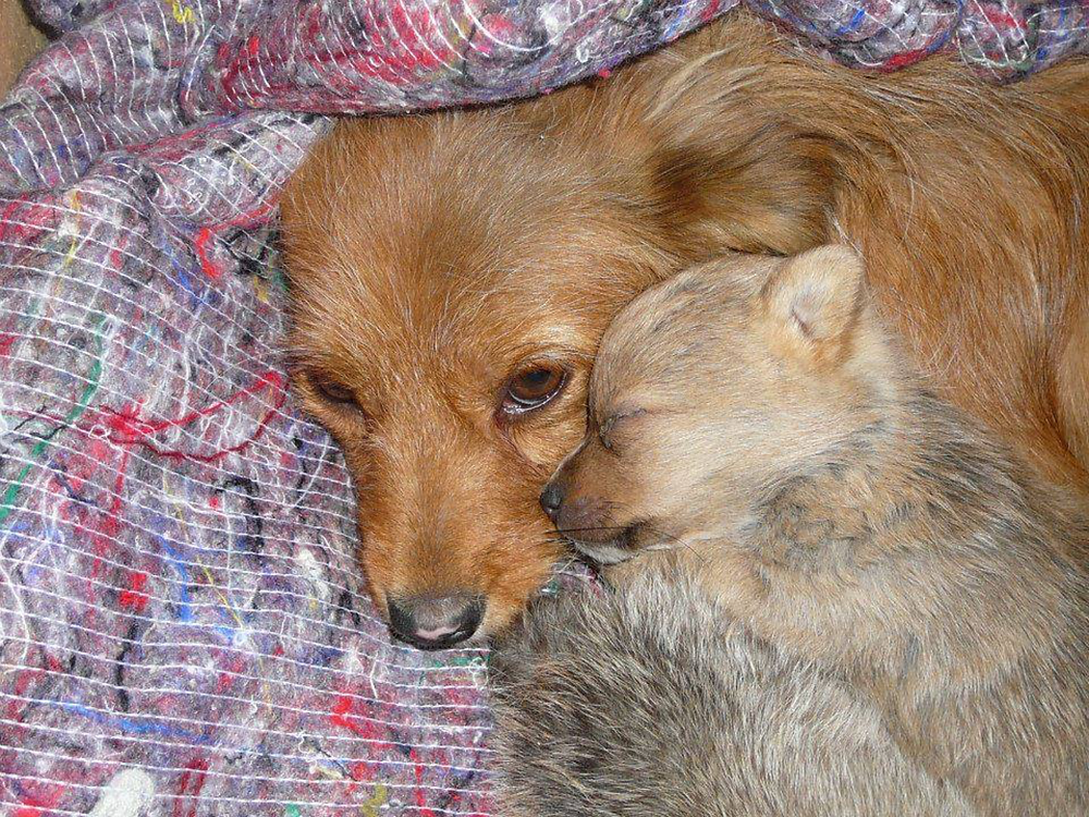 Romania Rescue, Photography by Louisa Jane, Rescue animals, Adopt don't shop