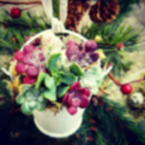 I've got Bucket loads of holiday cheer!_#christmaswithsucculents #livingtreeornament