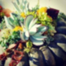 Pump(k)in it up!  #falldecor #heirloompumpkin #succulentlove #botanicalart