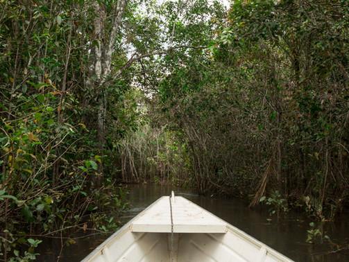 Plano de Negócios para a Associação Rede de Sementes do Xingu
