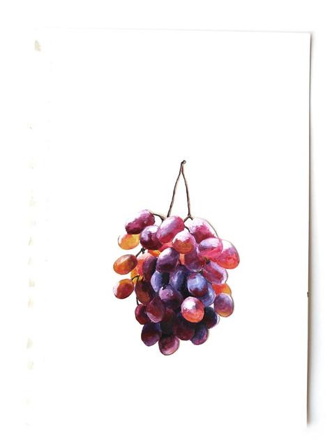 Grape study