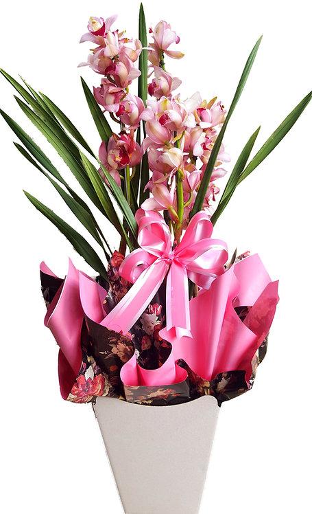 Orquidea Symbidium