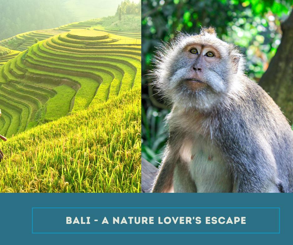 Bali nature