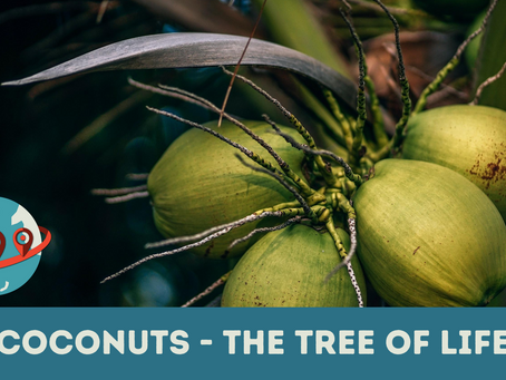 Nuts for Coconuts!