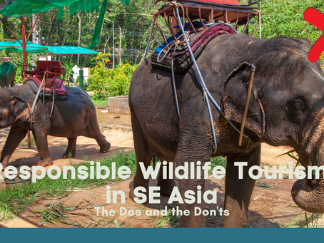 Responsible Wildlife tourism in SE Asia: The dos and the don'ts
